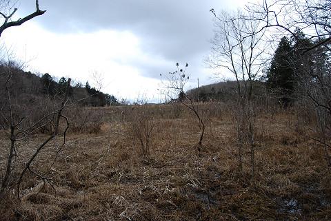 真冬の長命湿地は