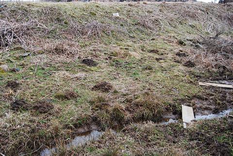 モグラの掘った土が