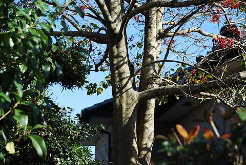 赤い実の木の幹