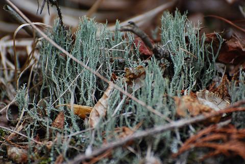 蘚苔類は難しい
