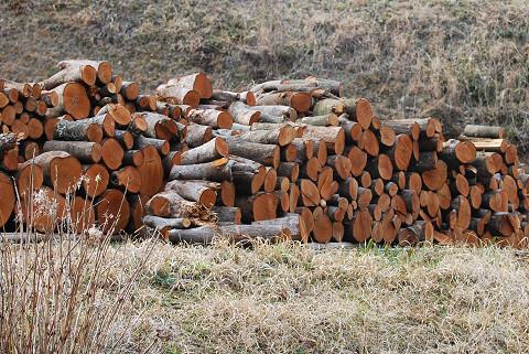 赤い幹の薪が