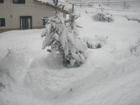 yuki20091220.jpg