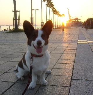 夕日がキレイ