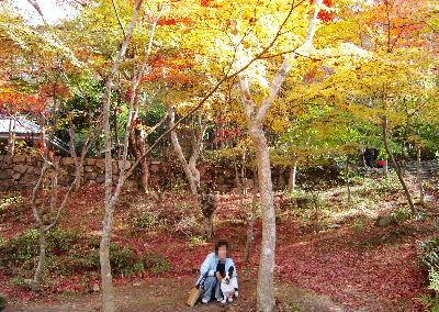 瑞宝寺公園2