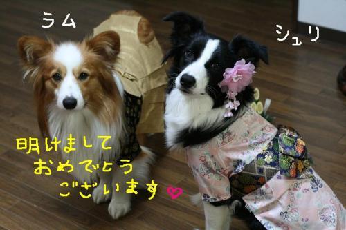 IMG_3485  ☆