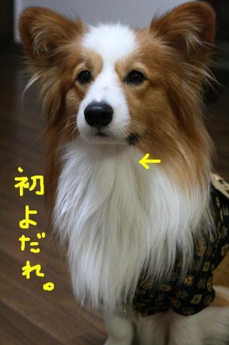 IMG_3461 ☆