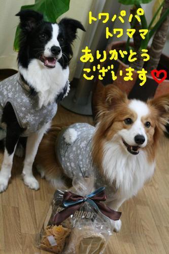 IMG_3542 ☆