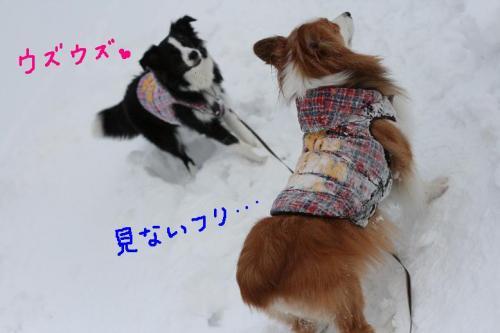 IMG_3881 ☆