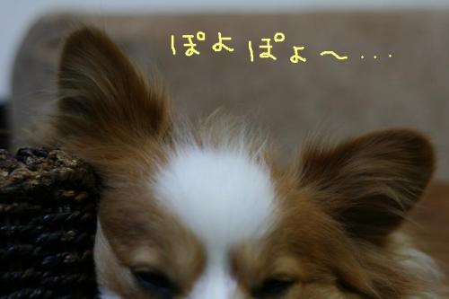 IMG_5687 ☆