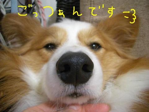 コンデジ画像 ☆ 092 b