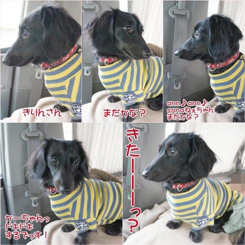 20120120ichigo.jpg