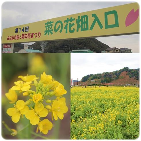 20120303minaminosakura2.jpg