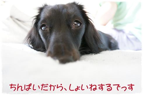 DSC00041_20120131205244.jpg