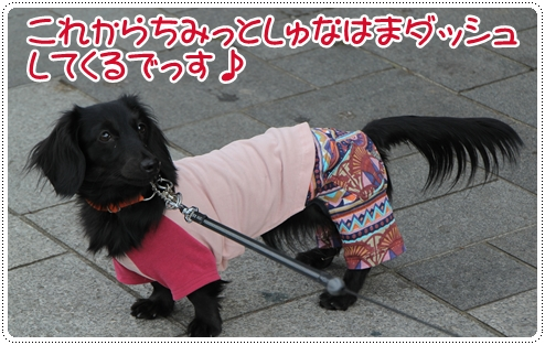 IMG_8202.jpg