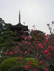 2008.4.6  山口瑠璃光寺五重塔2