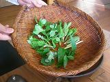 2008.6.9 料理 山菜