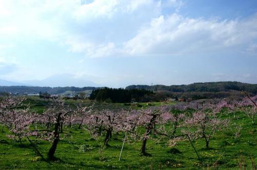 高原の風とピンクの季節11