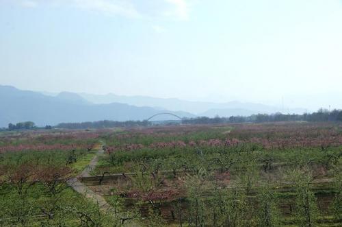 高原の風とピンクの季節14