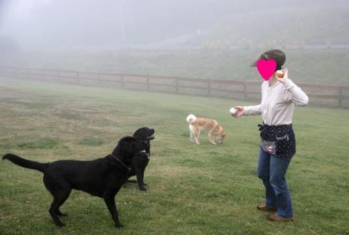 霧に包まれて2