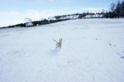 初!雪遊び9