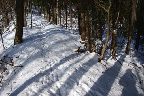 本格的な雪7