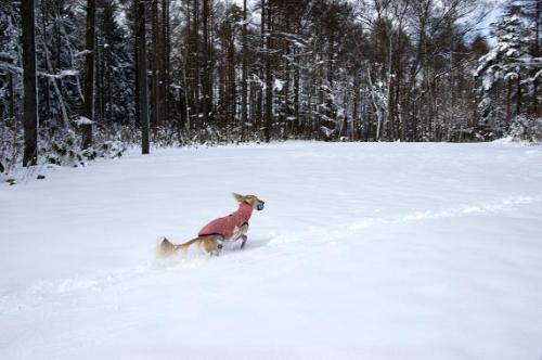 雪国犬だって・・1