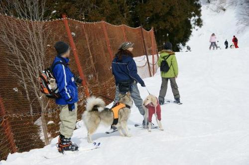 ♪スキー天国へ~♪13