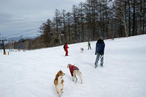♪スキー天国へ~♪3