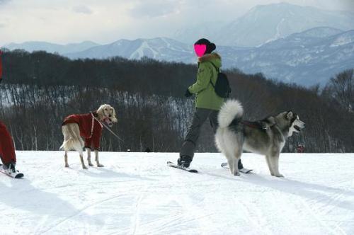 ♪スキー天国へ~♪7