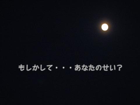 IMG_3168のコピー