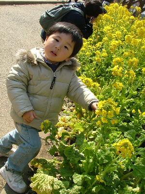 ダンと菜の花