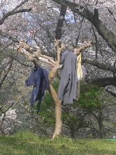 ハンガーの木