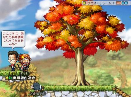 Maple1109.jpg