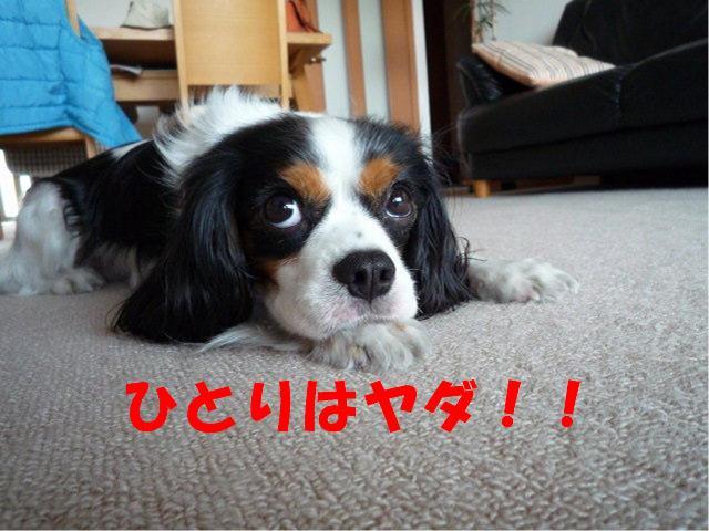 dc051208 コピー1cc