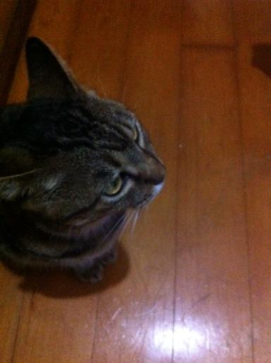 20110921猫お風呂01