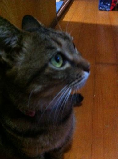 20110921猫お風呂03