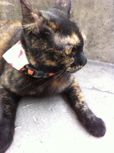 20111024さび猫03a