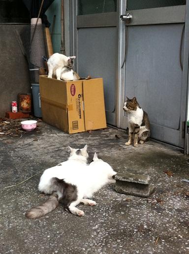 20111028ショップ猫06