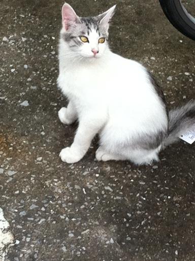 20111028ショップ猫03