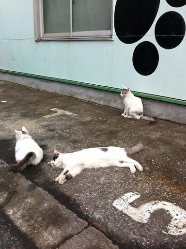 20111028ショップ猫05