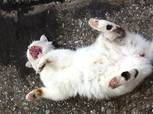 20111028ショップ猫01