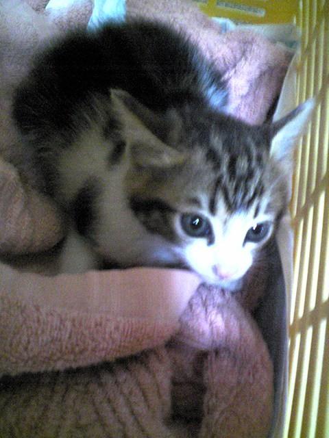 100601新入り子猫12
