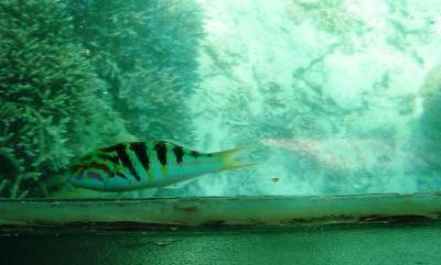 サンゴト熱帯魚