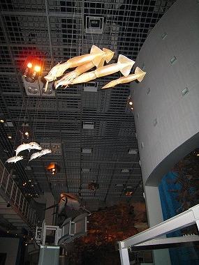 国立科学博物館24