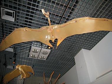 国立科学博物館34