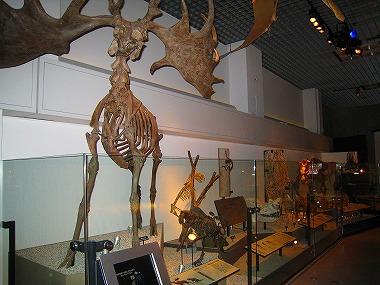 国立科学博物館35