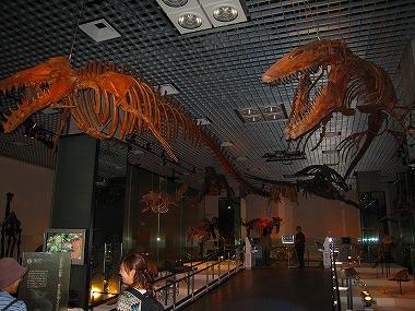 国立科学博物館36