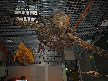 国立科学博物館37