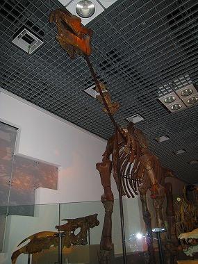 国立科学博物館39