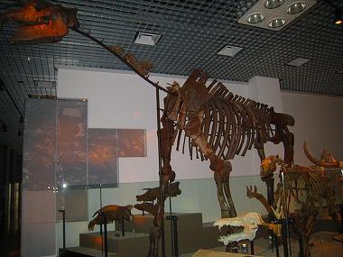 国立科学博物館40